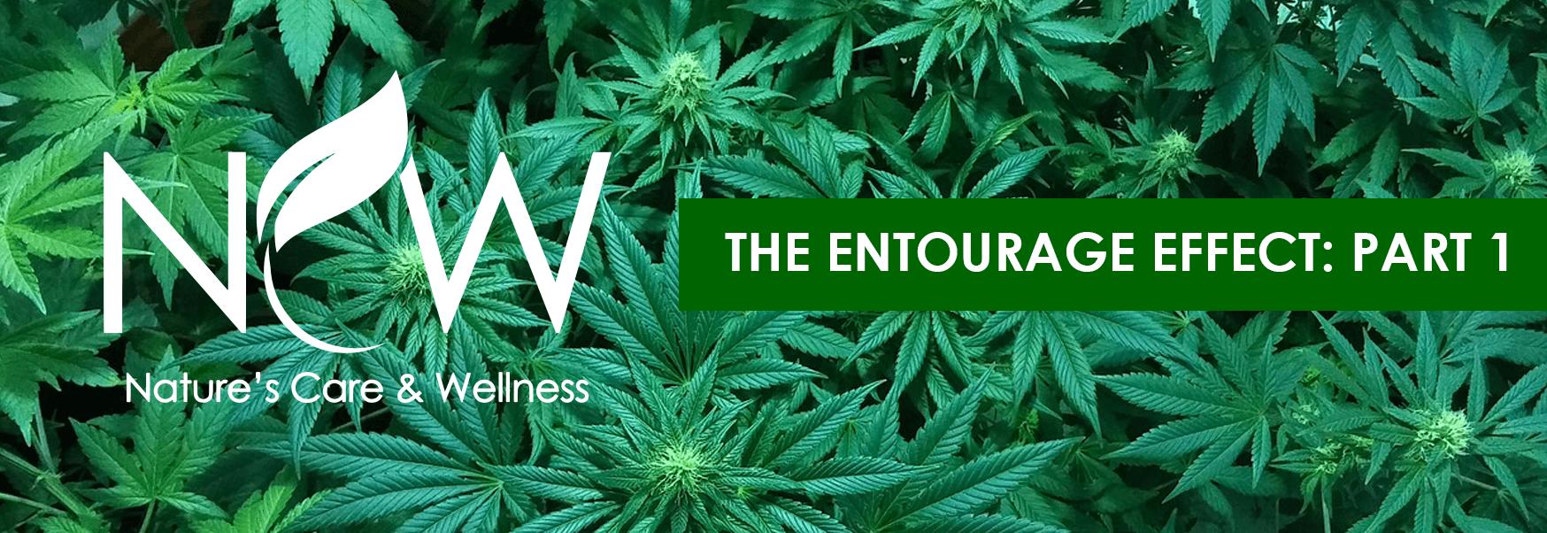 The Entourage Effect: Part 1